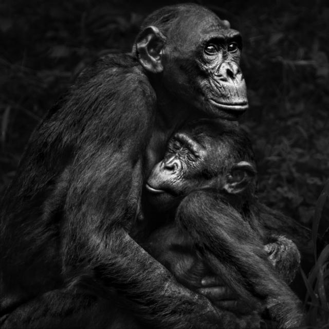 , 'Serie Primates, 1/25,' 2015, N2 Galería