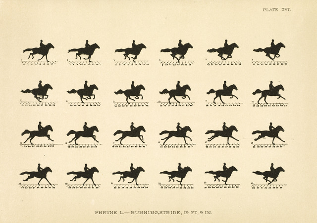 Riders on the storm? Muybridge's moving horse projected on ...