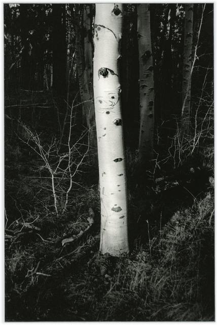 , 'Untitled (4.5 billions years a lifetime, tree aura),' 2019, Casemore Kirkeby