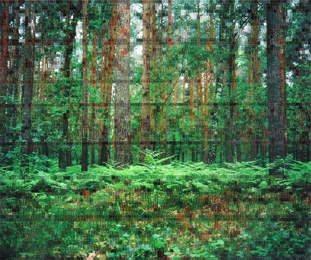 , 'Forest, Hohen Neuendorf,' 2012-2017, Pictura Gallery