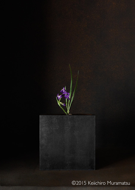 , 'A Stage Iris 5-4,' 2015, Galerie Marie-Robin