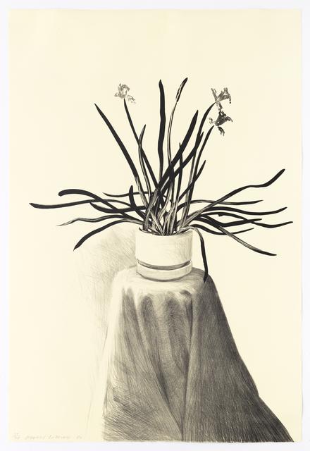 David Hockney, 'Potted Daffodils', 1980, Mary Ryan Gallery, Inc