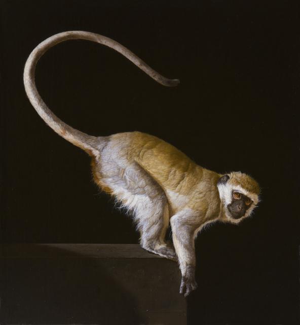 , 'A Wild Savanna Vervet Monkey,' 2015, Gallery Henoch