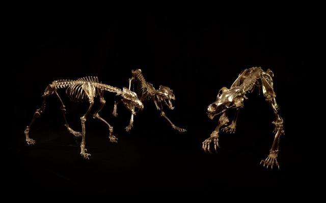 , 'Kodiak brown Bear, grey Wolf skeletons,' , Bel-Air Fine Art