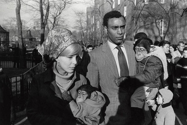 , 'Central Park Zoo, New York,' 1967, Pace/MacGill Gallery