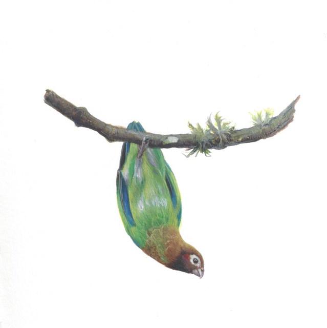 , 'Brown-hooded Parrot,' 2018, Garvey   Simon