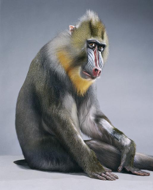 , 'Monkey Suit,' 2005, Olsen Irwin