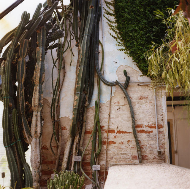 , 'Padua Botanical #17,' 2013, Newzones
