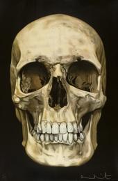 The Skull Beneath the Skin