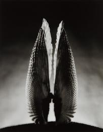 Ruth Bernhard, 'Angel Wings,' 1943, Phillips: Photographs (April 2017)