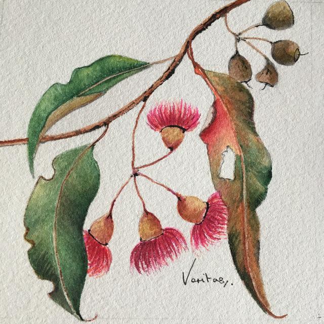 , 'Corymbia Ficifolia-Red Flowering Gum,' 2018, Margaret River Art Gallery