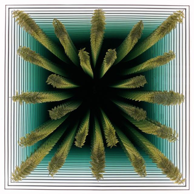 , 'Ferns,' 2018, Winston Wächter Fine Art
