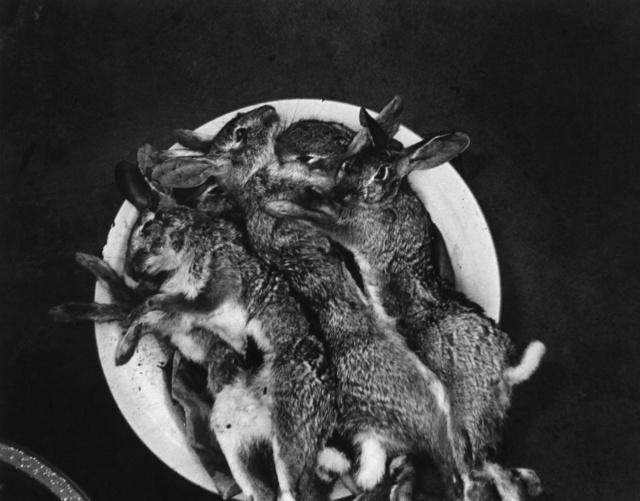 , 'Conejos en la luna, Juchitan, México,' 1986, MATE Museo Mario Testino