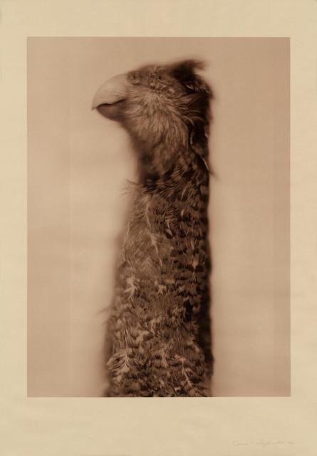 , 'Kakapo Ground Parrot (Sepia),' 2017, Gemini G.E.L. at Joni Moisant Weyl