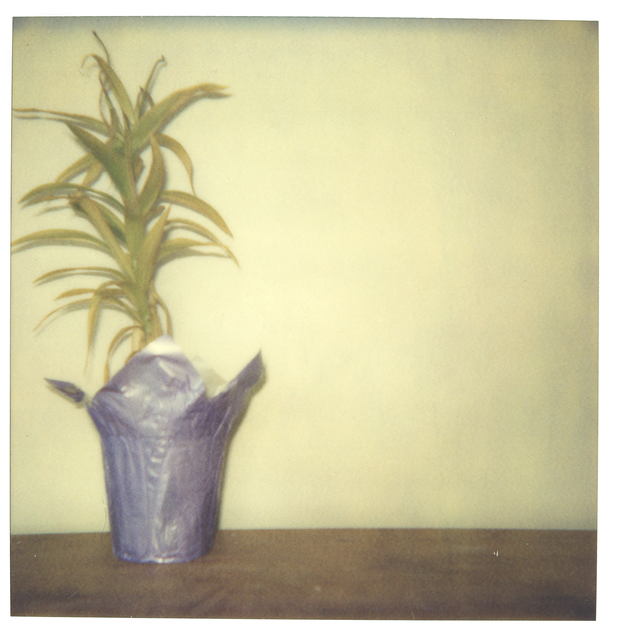 Stefanie Schneider, 'Lonely Plant', 1999, Photography, Digital C-Print based on a Polaroid, not mounted, Instantdreams