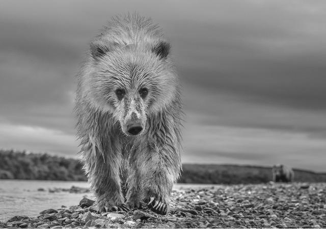 David Yarrow, 'Ted', 2018, Fineart Oslo