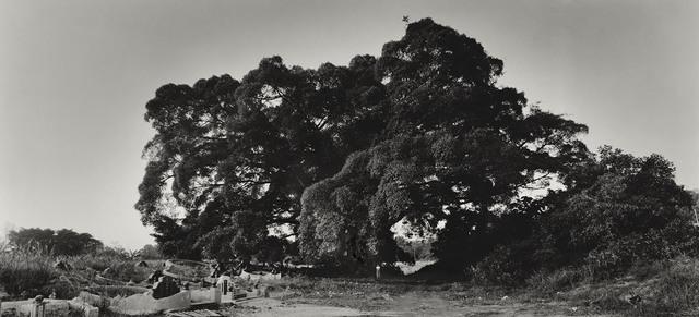 , 'Scale or Tasha and the Tree,' 2005-2014, Tracy Williams, Ltd.