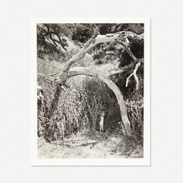 Wynn Bullock, 'Untitled,' 1959, Wright: Prints + Multiples (January 2017)