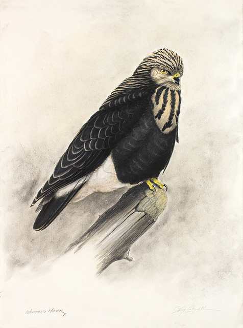 Tony Angell, 'Winter's Hawk', 2021, Drawing, Collage or other Work on Paper, Lithograph with hand painting, Foster/White Gallery