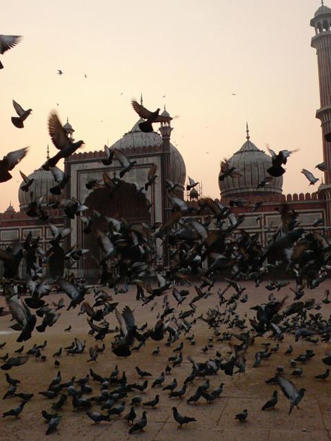 Ralf Schmerberg, 'Birds Have No Religion, Jama Masjid, New Delhi, India', 2013, Bryce Wolkowitz Gallery