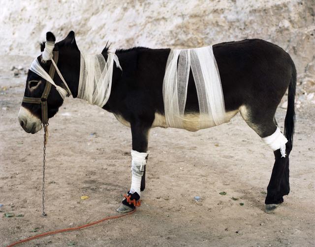 , 'Mountain Zebra,' 2008, Officine dell'Immagine