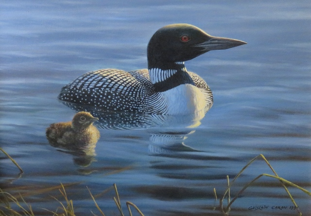 , 'Common Loon and his chick,' 1991, Arctic Experience McNaught Gallery