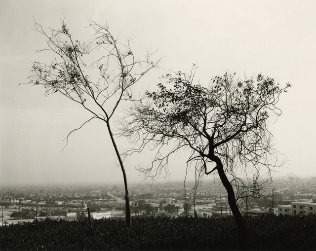 , 'On Signal Hill, Overlooking Long Beach, California,' 1983, Lee Gallery
