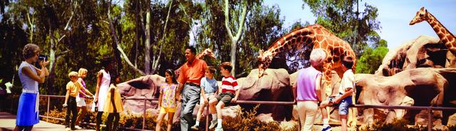 , 'Colorama 309, San Diego Zoo, California,' Displayed 7/15/68-8/5/68, George Eastman Museum