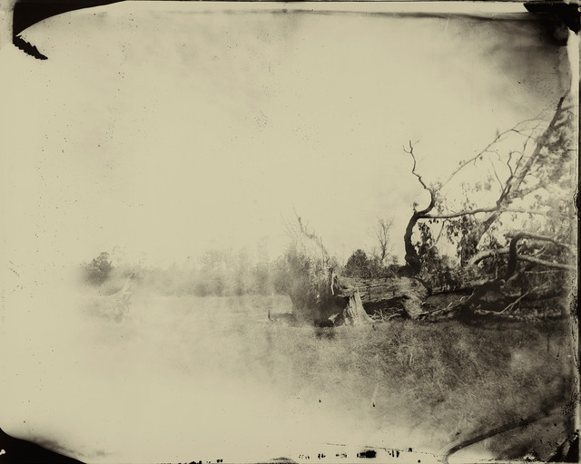 , 'Deep South, Untitled (Fallen Tree),' 1998, Gagosian