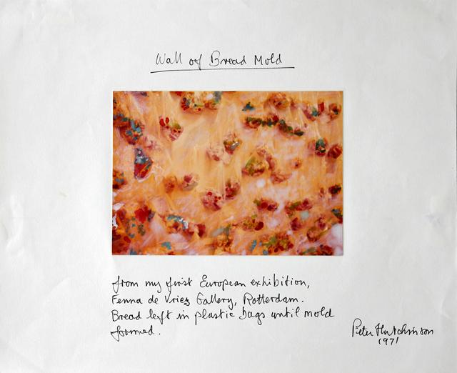 , 'Wall of Bread Mold,' 1971, Gaa Gallery