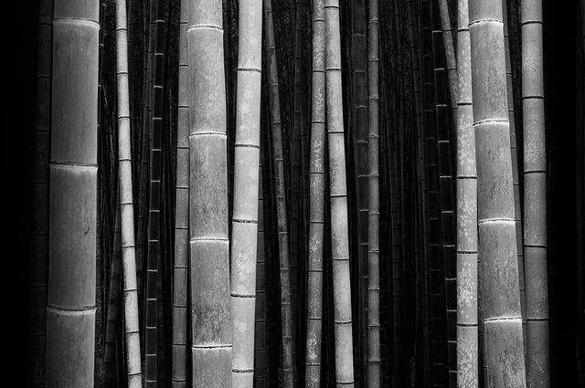 , 'Bamboo Forest,' 2016, Alisan Fine Arts