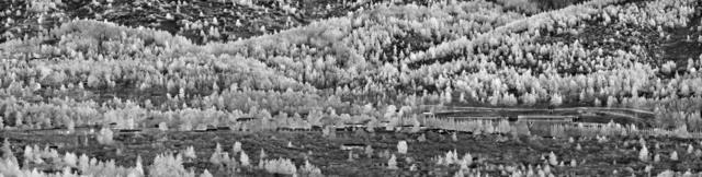 Richard Mosse, 'Camp Gerakini, Malakasa, Eastern Attika, Greece', 2017, carlier | gebauer