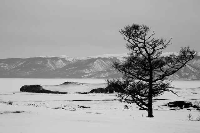 , 'A lonely tree (Olkhon Island, Lake Baikal, Siberia),' 2013, Pushkin House