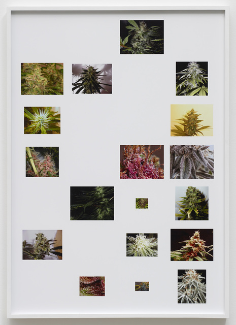 Joachim Koester, 'Dark Sativa Spirit Star', 2014, Galleri Nicolai Wallner