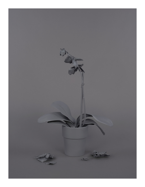 , 'Neutral Orchids (Phalaenopsis, mort),' 2016, Catharine Clark Gallery