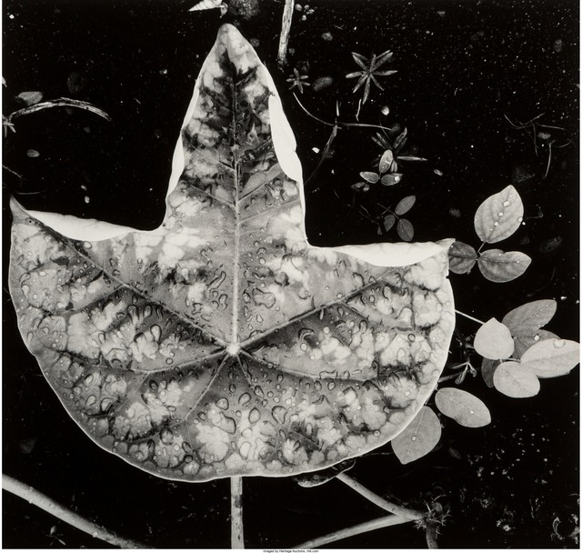 Brett Weston, 'Leaf and Rain Drops (from Hawaii)', 1979, Heritage Auctions
