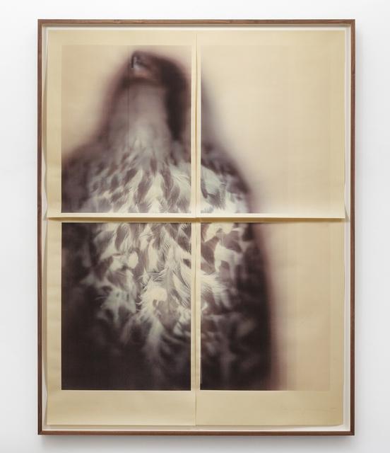 Ann Hamilton, 'Peregrine Falcon', 2017, Gemini G.E.L.