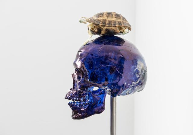 , ' Skull with Turtle,' 2017, PinchukArtCentre