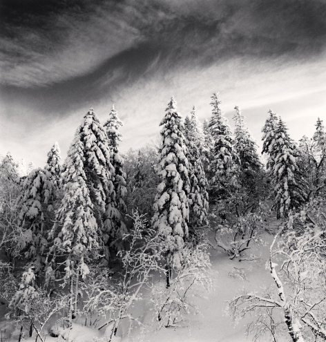 Michael Kenna, 'Snow Clad Trees, Heilongjiang, China', 2012, Weston Gallery