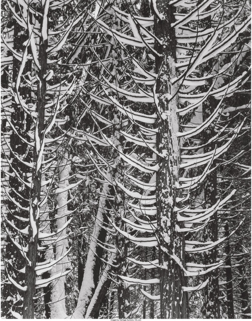 Ansel Adams, 'Winter, Forest Detail, Yosemite Valley', 1949, Heritage Auctions