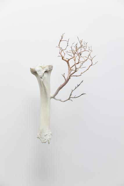 , 'Bone,' 2013, Galerie Paris-Beijing