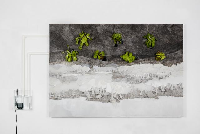 , 'The Carnivorous Island,' 2016, Galerie Ora-Ora