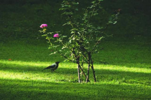 Abbas Kiarostami, 'Trees & Crows 62', 2007, Meem Gallery