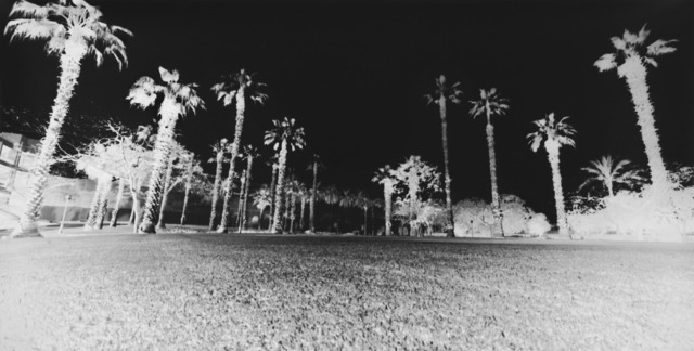 , 'Palm Trees, Giza: April 20, 2010,' 2010, Gagosian