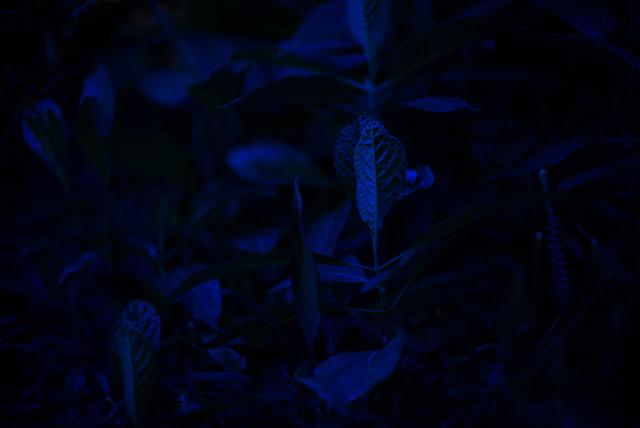 , 'Blue Plant II,' 2018, ZETO ART