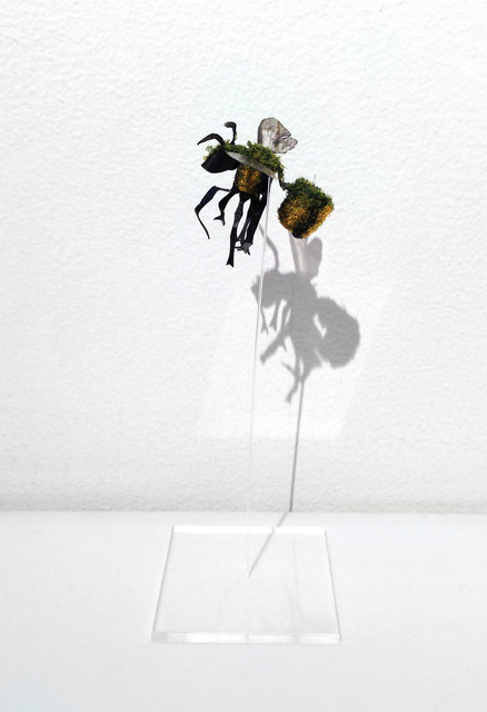 , 'Bombus,' 2013, May Space