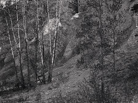 , 'Trees, Glacier Park, Vancouver, BC,' 1978, Pucker Gallery