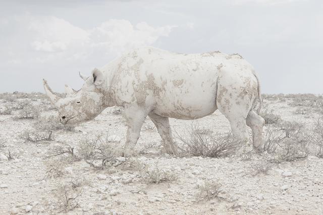, 'White Rhino, Namibia,' 2015, Robert Mann Gallery