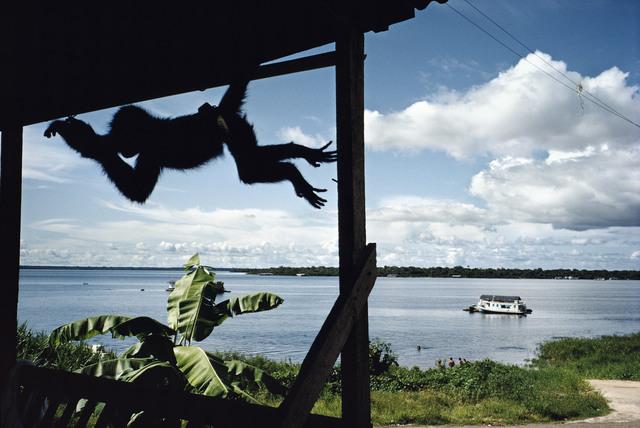 , 'Tefe. BRAZIL. ,' 1979, Magnum Photos