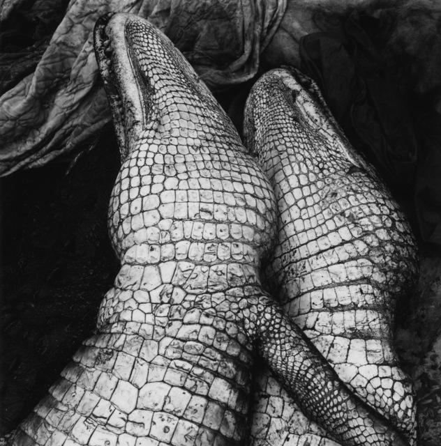 , 'Gator Love,' 1995, Gitterman Gallery